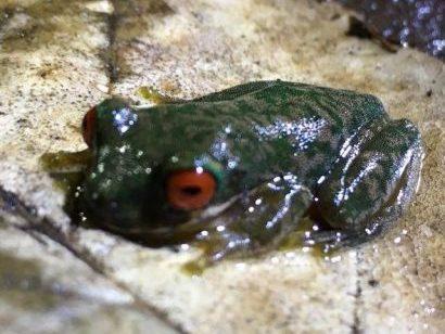 Bin ich ein hässlicher Frosch oder warum will mich keine?